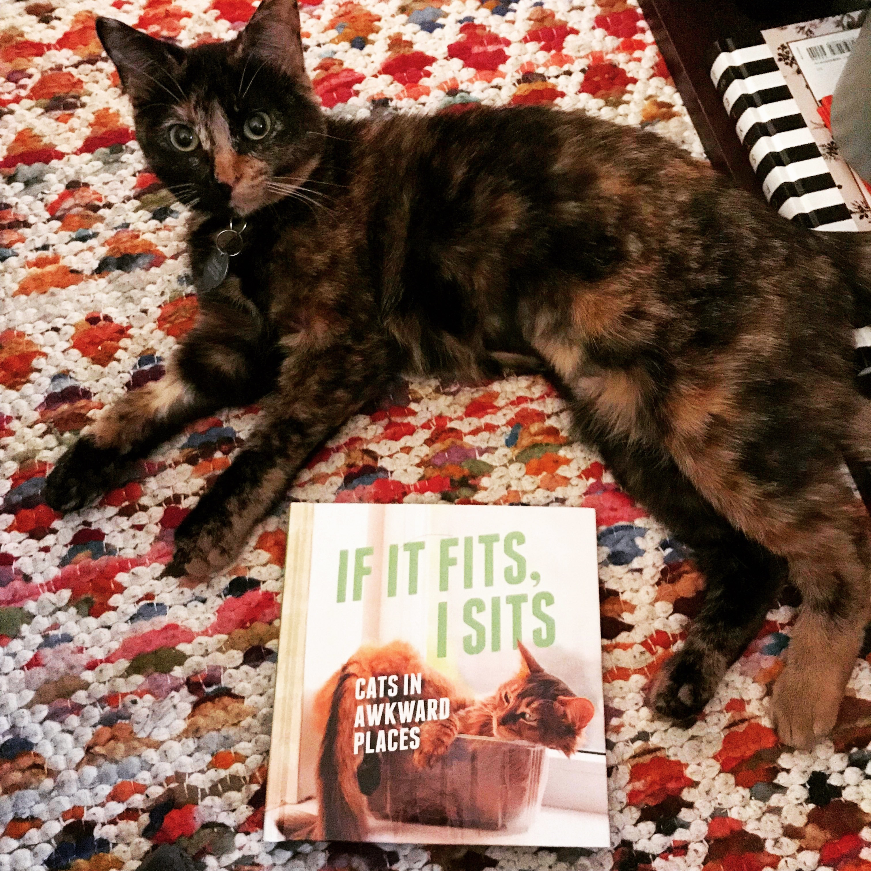 7 Books To Read In Honor Of Adopt A Shelter Cat Month Get Literary